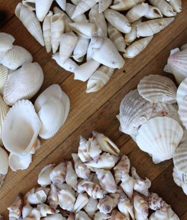 sea shell flower pot, crafts