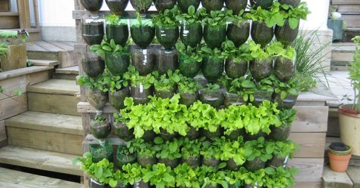 13 Plastic Bottle Vertical Garden Ideas | Soda Bottle Garden | Hometalk