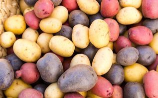 how to grow potatoes, gardening, homesteading, how to