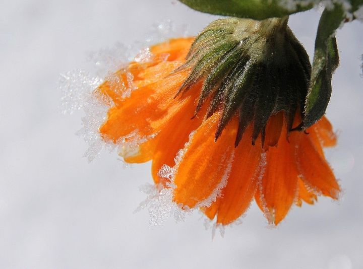 winter gardening now s the time to get a jump on spring planting, container gardening, gardening