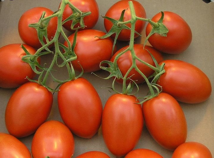 how to wash tomatoes, gardening, how to