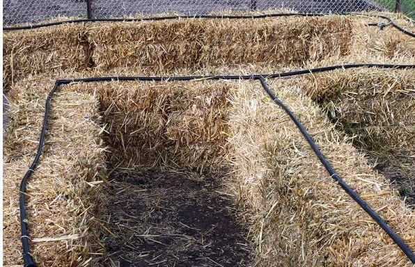 installing an irrigation system in a straw bale garden, gardening, how to, landscape, plumbing