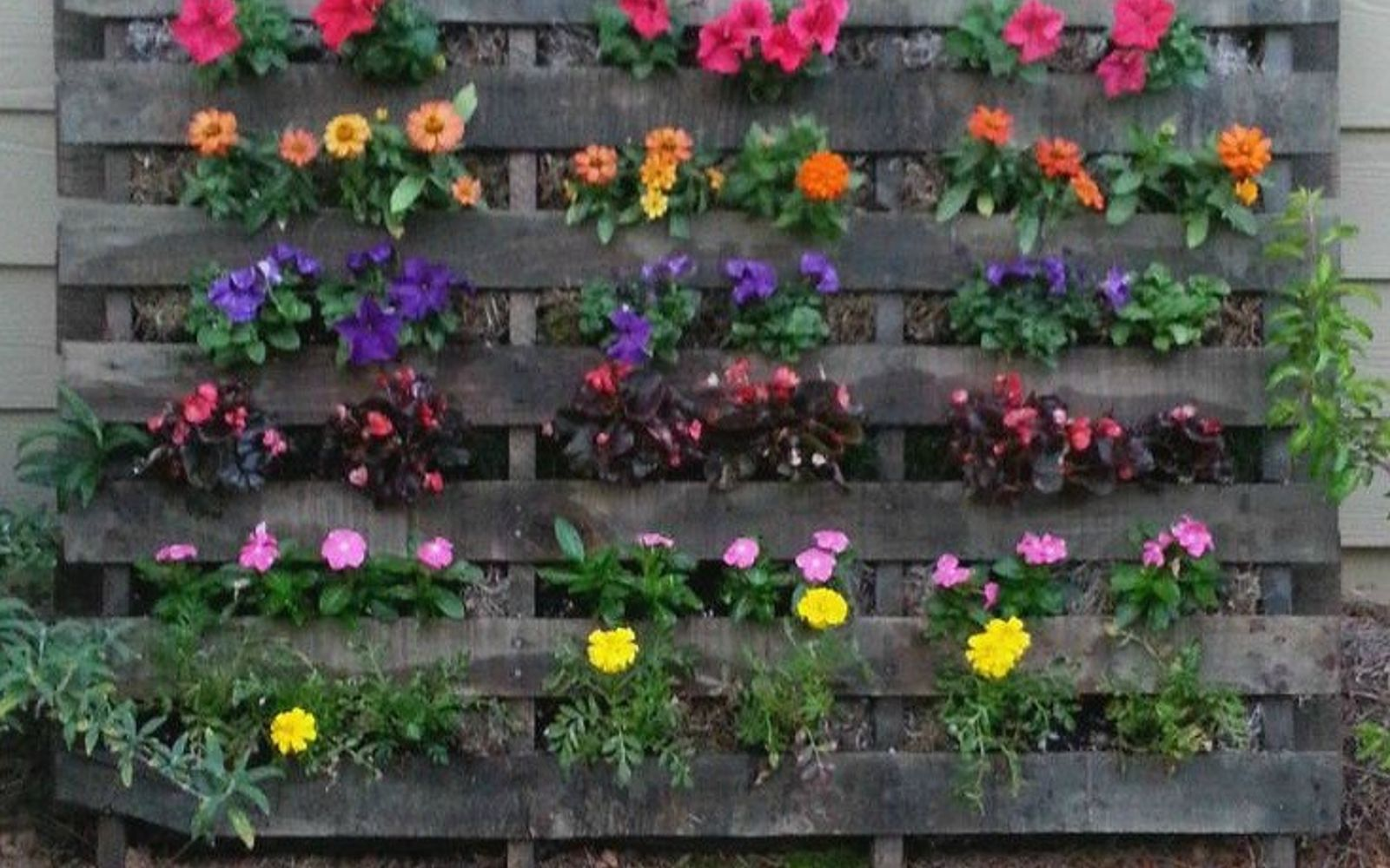 s 18 incredibly easy ways to use the entire pallet, pallet, Fill one with soil and blooming flowers