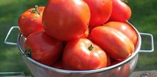 the 6 keys to growing healthy tomato plants this year, diy, gardening, how to, A big harvest of juicy tomatoes