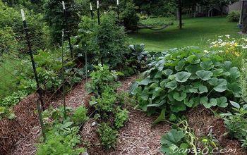 Cutting Back Overgrowth | Straw Bale Gardening