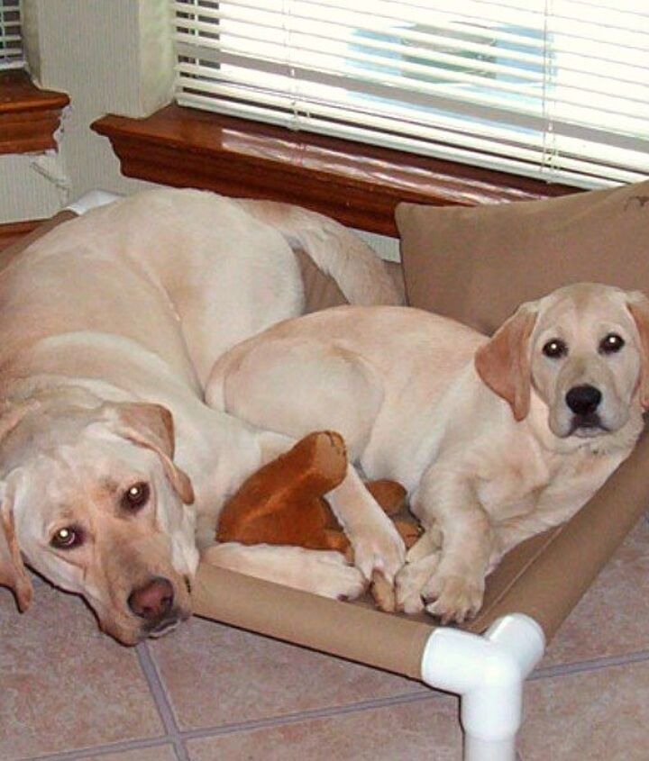 s 15 ridiculously cool uses for leftover pvc pipe, crafts, repurposing upcycling, Create a Cozy Hammock for Your Pup