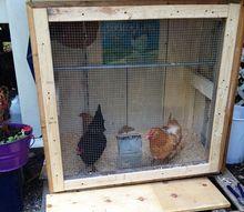 a summer chicken coop, diy, doors, homesteading, outdoor living, repurposing upcycling, woodworking projects