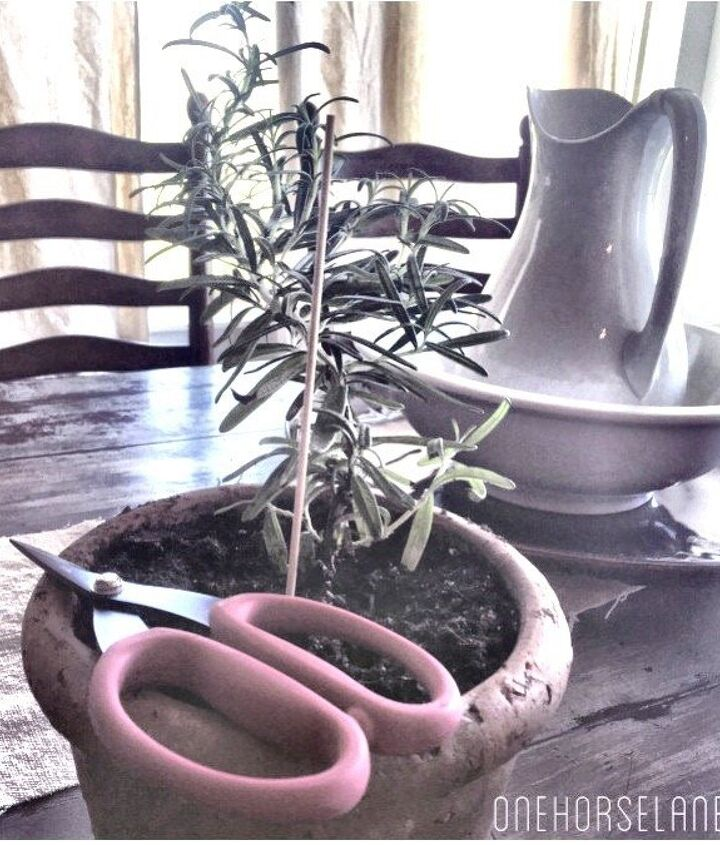 easy diy living rosemary and boxwood topiary on a budget, container gardening, gardening