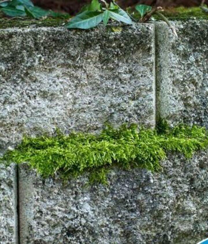 1. Remove Moss from Bricks with No Scrubbing