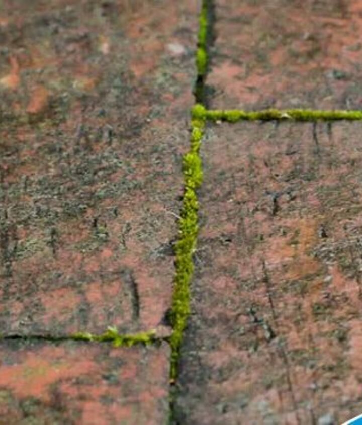 2. Defeat Moss on Your Driveway