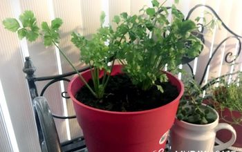 Celery on Your Windowsill - Lettuce Rejoice!