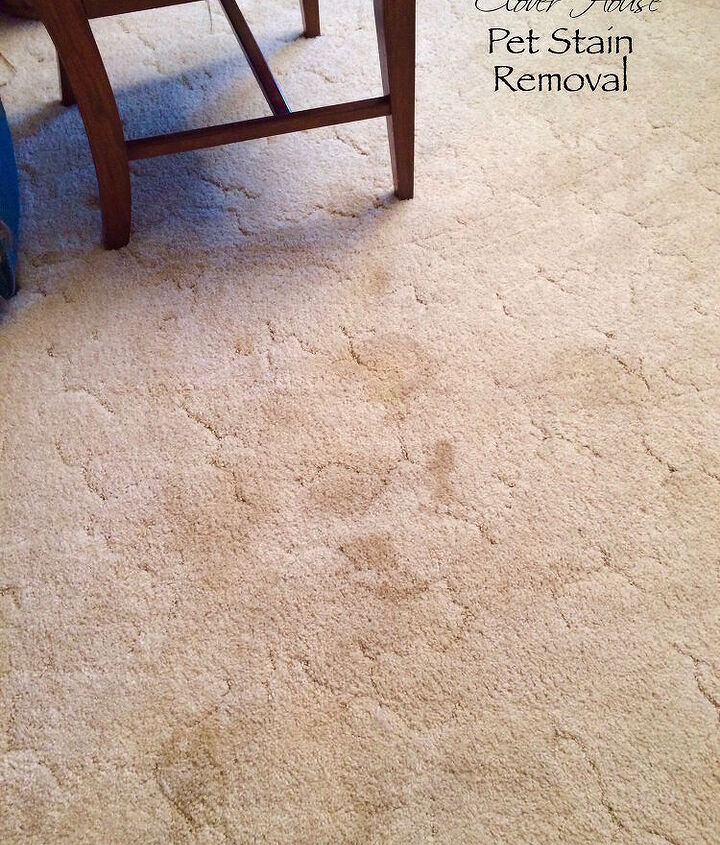 easy way to remove pet stains, cleaning tips, pet stain cleaning, pets, pets animals, reupholster