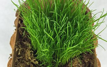 Make Easter Baskets With REAL Grass!