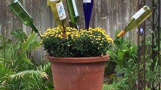 , Wine bottle on garden stakes