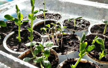 5 easy diy seed starter cup ideas, container gardening, gardening, repurposing upcycling
