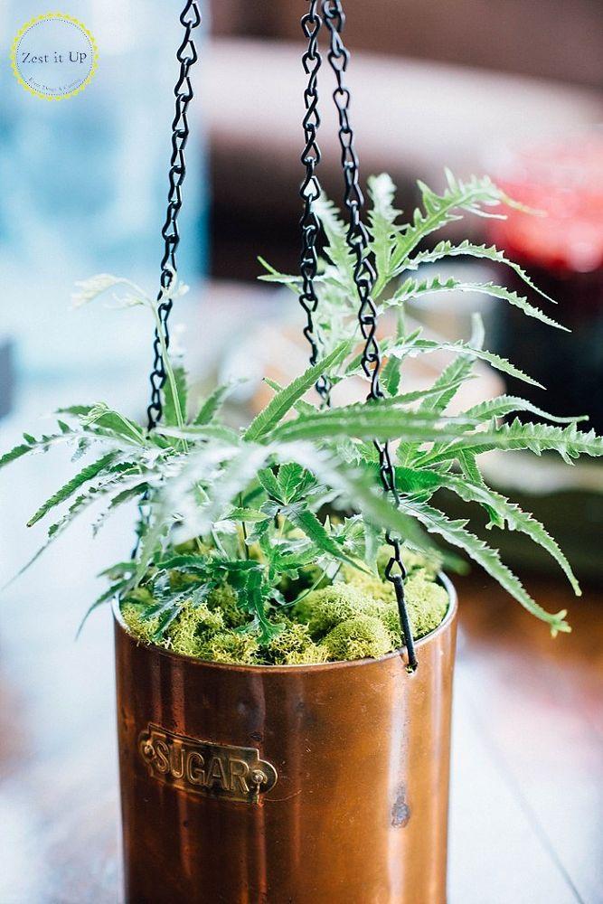 20 low maintenance container gardens for beginners hometalk for Low maintenance indoor hanging plants