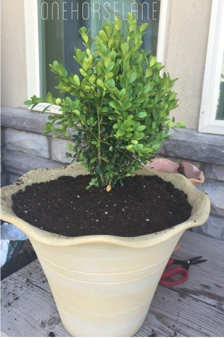 20 low maintenance container gardens for beginners hometalk - Container gardening basics ...