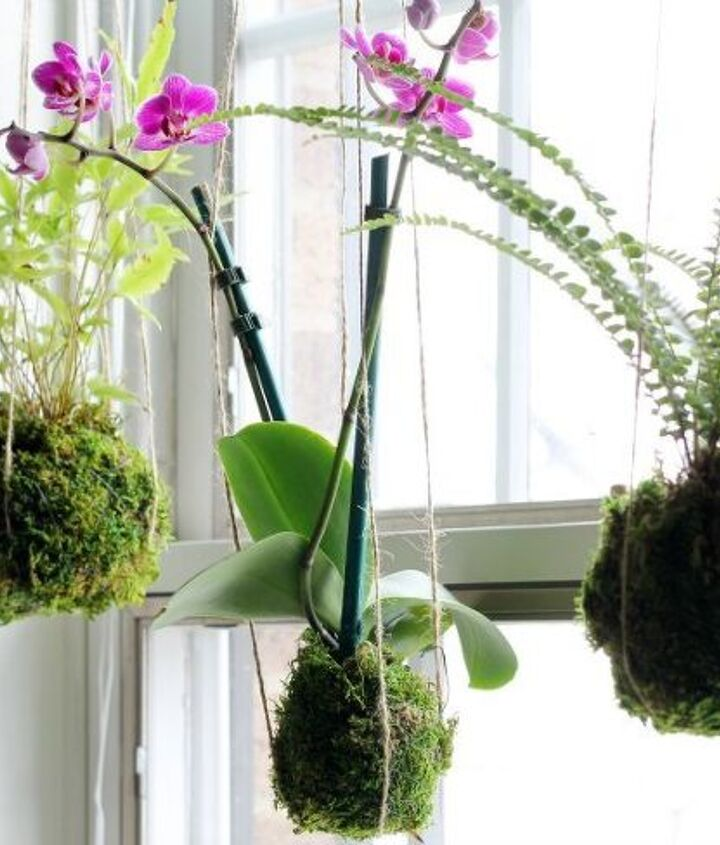 s 20 low maintenance container gardens for beginners, container gardening, gardening, Hang moss wrapped plants in the window