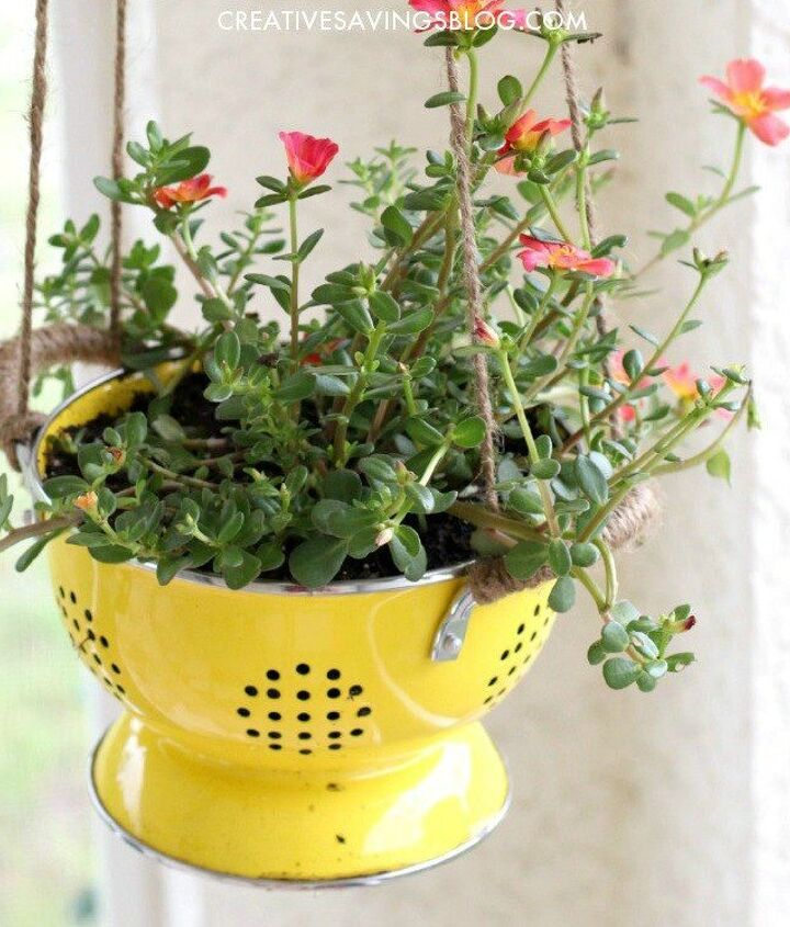 s 20 low maintenance container gardens for beginners, container gardening, gardening, Put a trailing plant in a colander