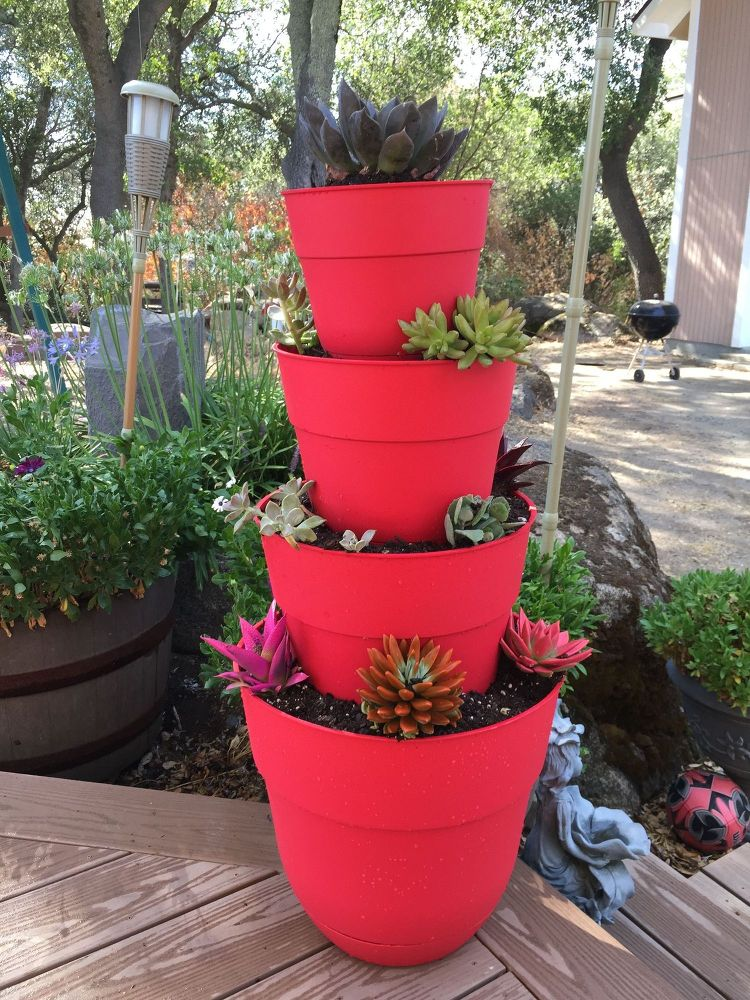 20 low maintenance container gardens for beginners hometalk for Growing gardens