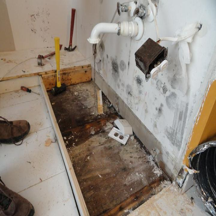 Ed By The People Connect Best Mold Removal Company Jacksonvil Cleaning Tips