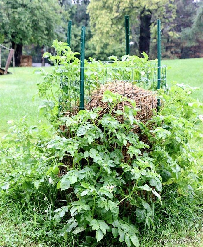 diy potato tower, gardening, homesteading, how to