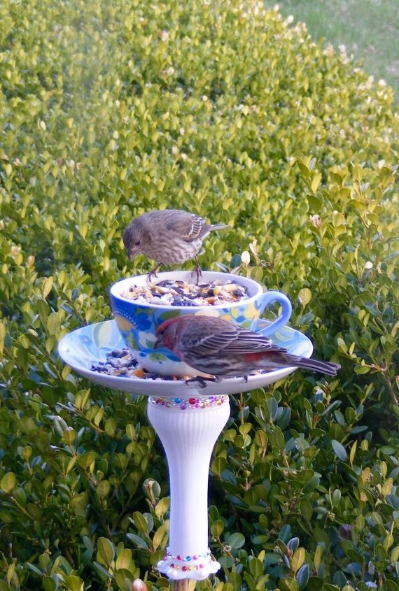 goodwill bird feeder for booboo, animals, crafts, how to, pets animals