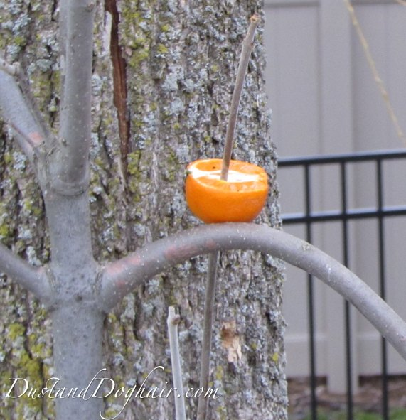 8 tips to attract orioles to your yard, animals, gardening, how to, pets animals