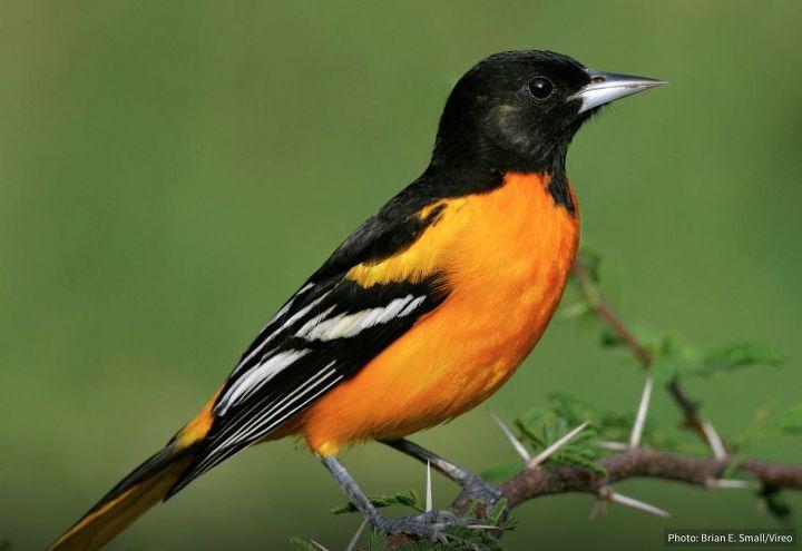 Photo via Audubon.org
