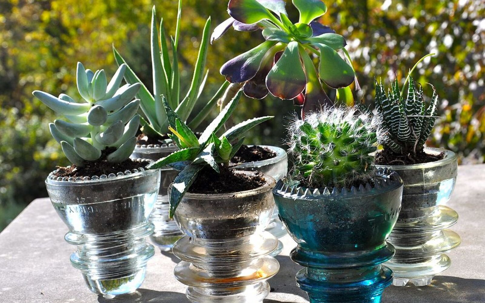 s the 15 tiniest succulent ideas we ve ever seen, flowers, gardening, succulents, Some lil cuttings nested in glass insulators
