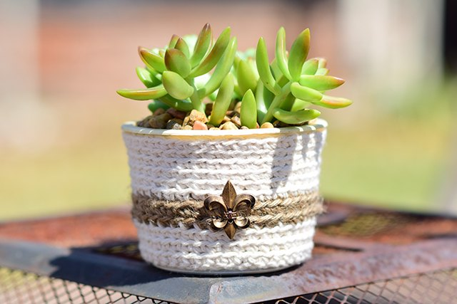 s the 15 tiniest succulent ideas we ve ever seen, flowers, gardening, succulents, This cream cheese container turned tiny pot