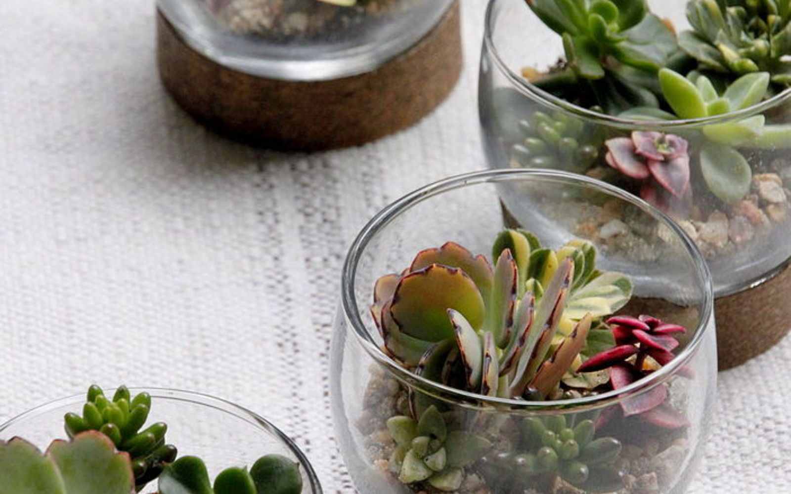 s the 15 tiniest succulent ideas we ve ever seen, flowers, gardening, succulents, These rather small raised succulent glasses