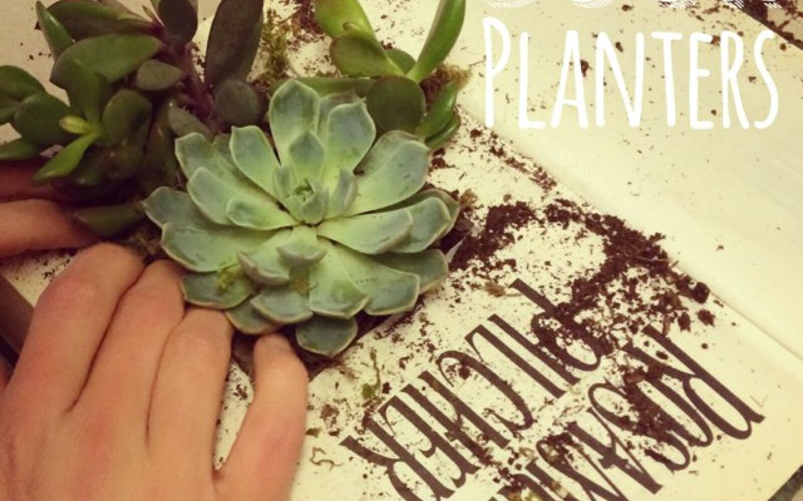 s the 15 tiniest succulent ideas we ve ever seen, flowers, gardening, succulents, This succulent filled story