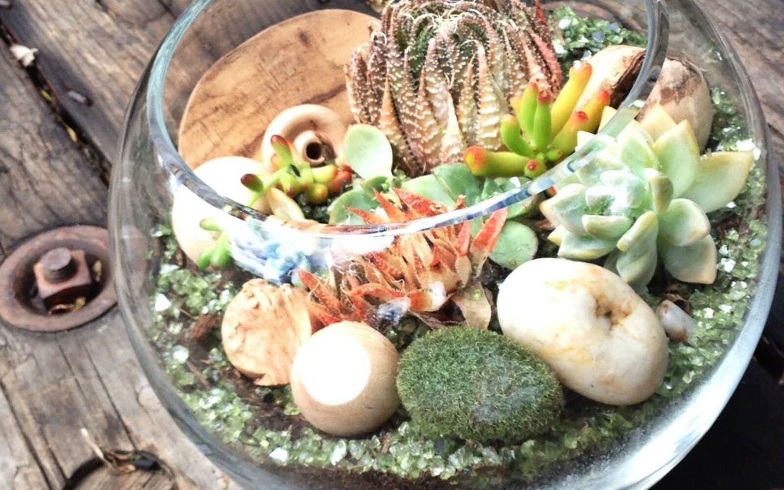 s the 15 tiniest succulent ideas we ve ever seen, flowers, gardening, succulents, This mini succulent forest in a fishbowl