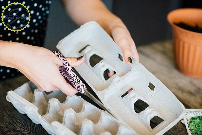 how to plant seedlings in egg cartons, container gardening, gardening, how to, repurposing upcycling