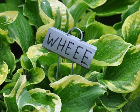Shade Gardening: How to Use Hostas to Best Advantage | Hometalk