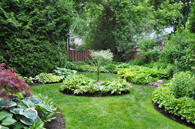 Shade Gardening: How to Use Hostas to Best Advantage | Hometalk on perennial grasses shade zone 6, perennial vines zone 6, perennial herb garden zone 6,