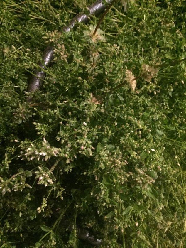 q wacky wonky non edible veggies, gardening