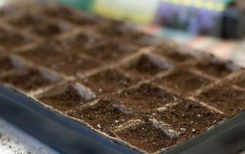 starting seeds, container gardening, gardening, how to