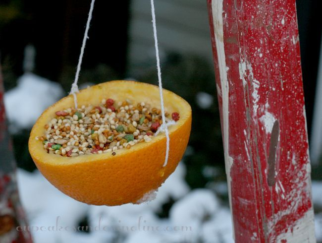 s 17 adorable birdfeeders using things you already own, outdoor living, repurposing upcycling, Fill an empty orange peel with seeds