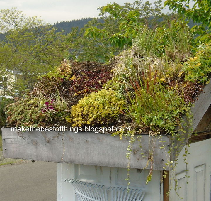 A Living Roof For Our Garden Shed Made From Wedding Doors