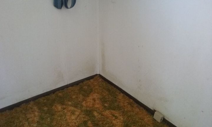 q i need help finding source of and removing mold from walls, cleaning tips, house cleaning, This is just one wall in one room The mold is in every corner and some along the wall as well as hall walls and other bedroom walls
