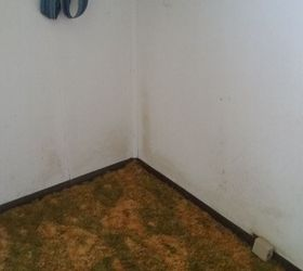 This Is Just One Wall In One Room. The Mold Is In Every Corner And