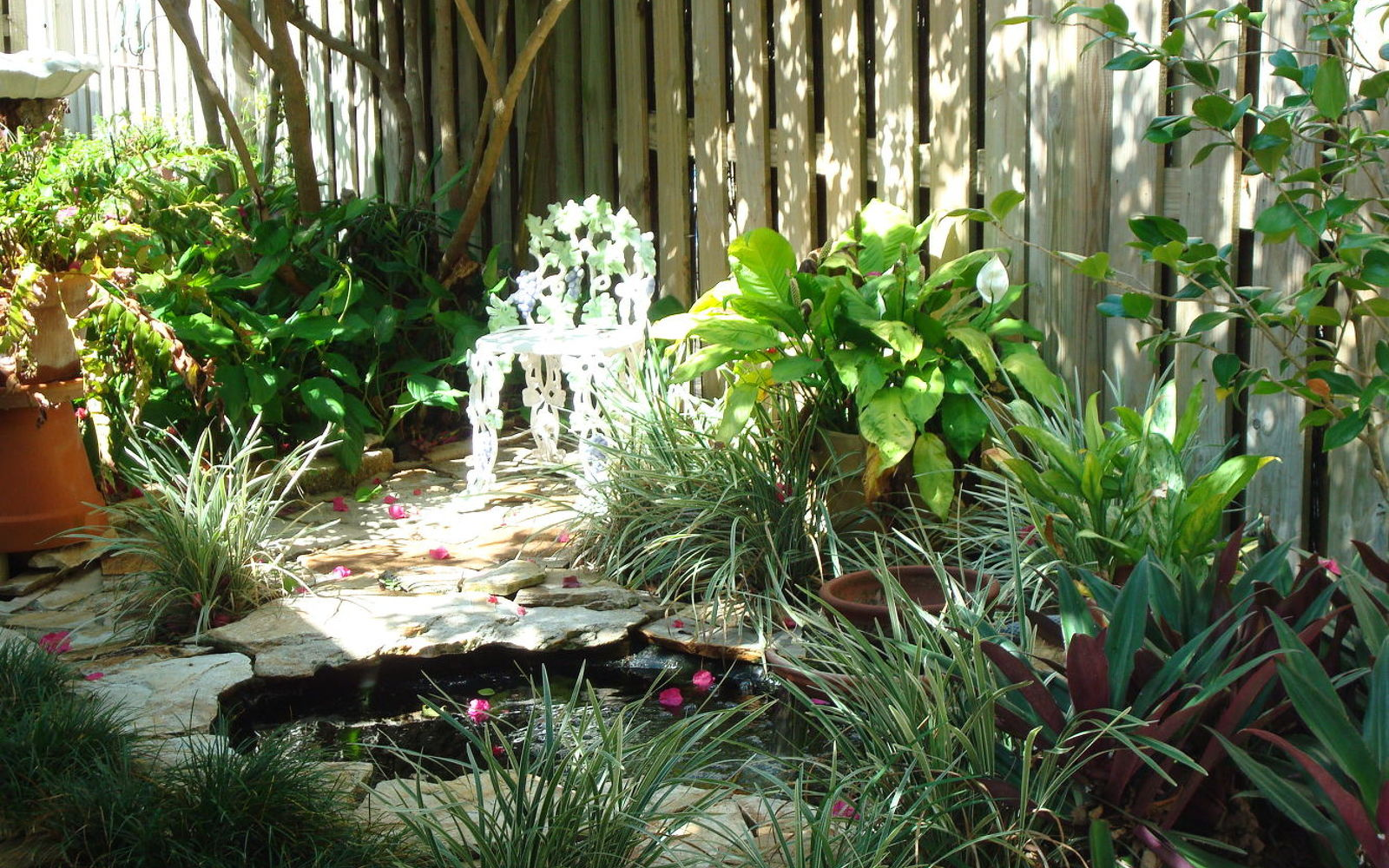 Image Result For How To Start A Shade Garden