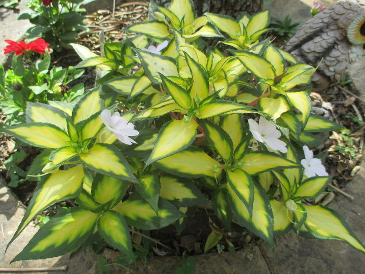q plant id needed , gardening, plant id, Unknown plant