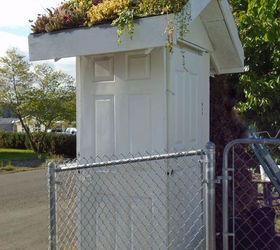 A Living Roof For Our Garden Shed Made From Wedding Doors, Gardening,  Outdoor Living