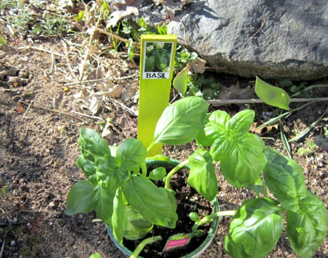 s 12 adorable plant markers from your junk drawer, gardening, repurposing upcycling, Pull out a few wandering wood shims