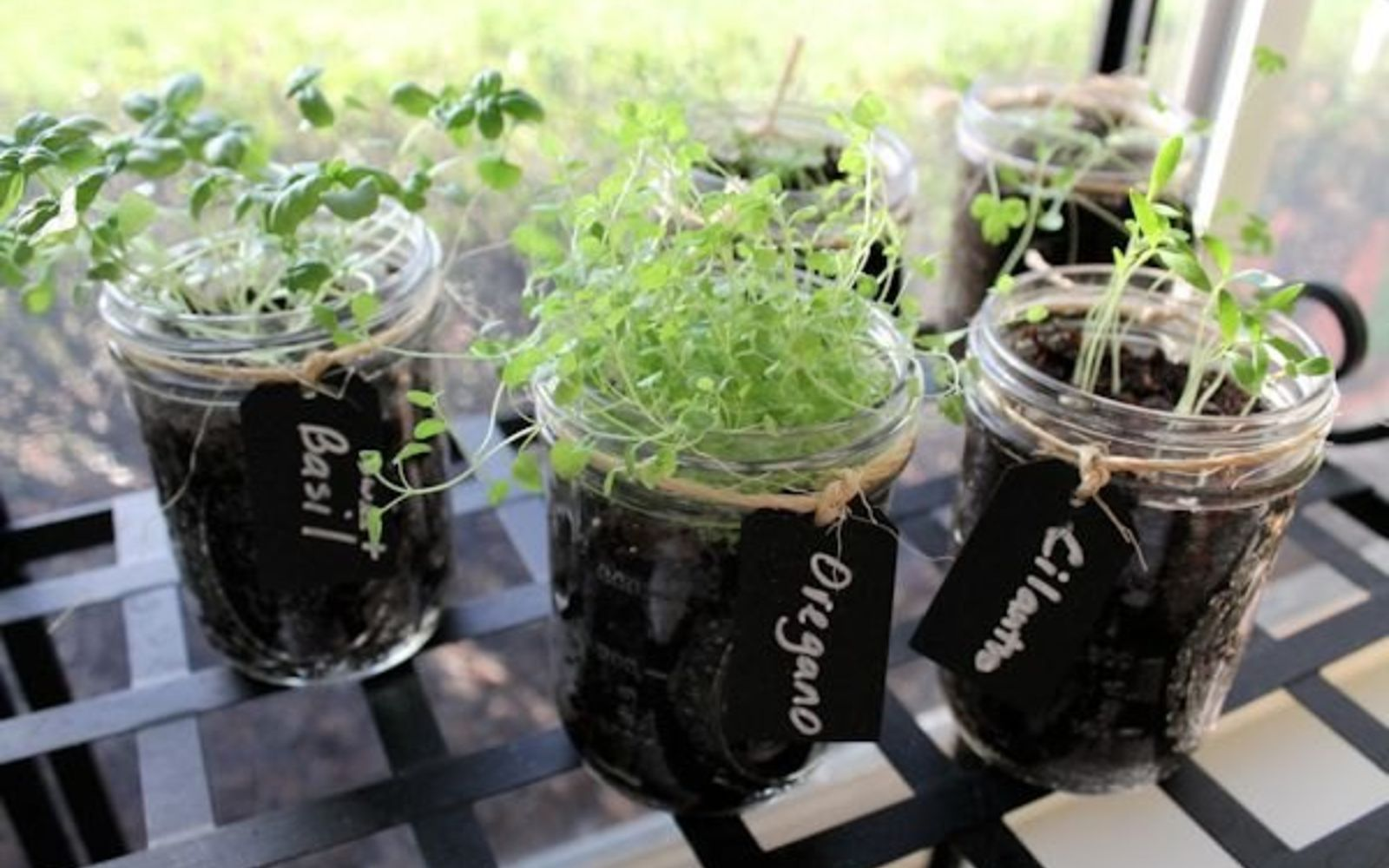 s 11 gardening hacks using empty glass jars, gardening, repurposing upcycling, Fit an entire herb garden on your windowsill