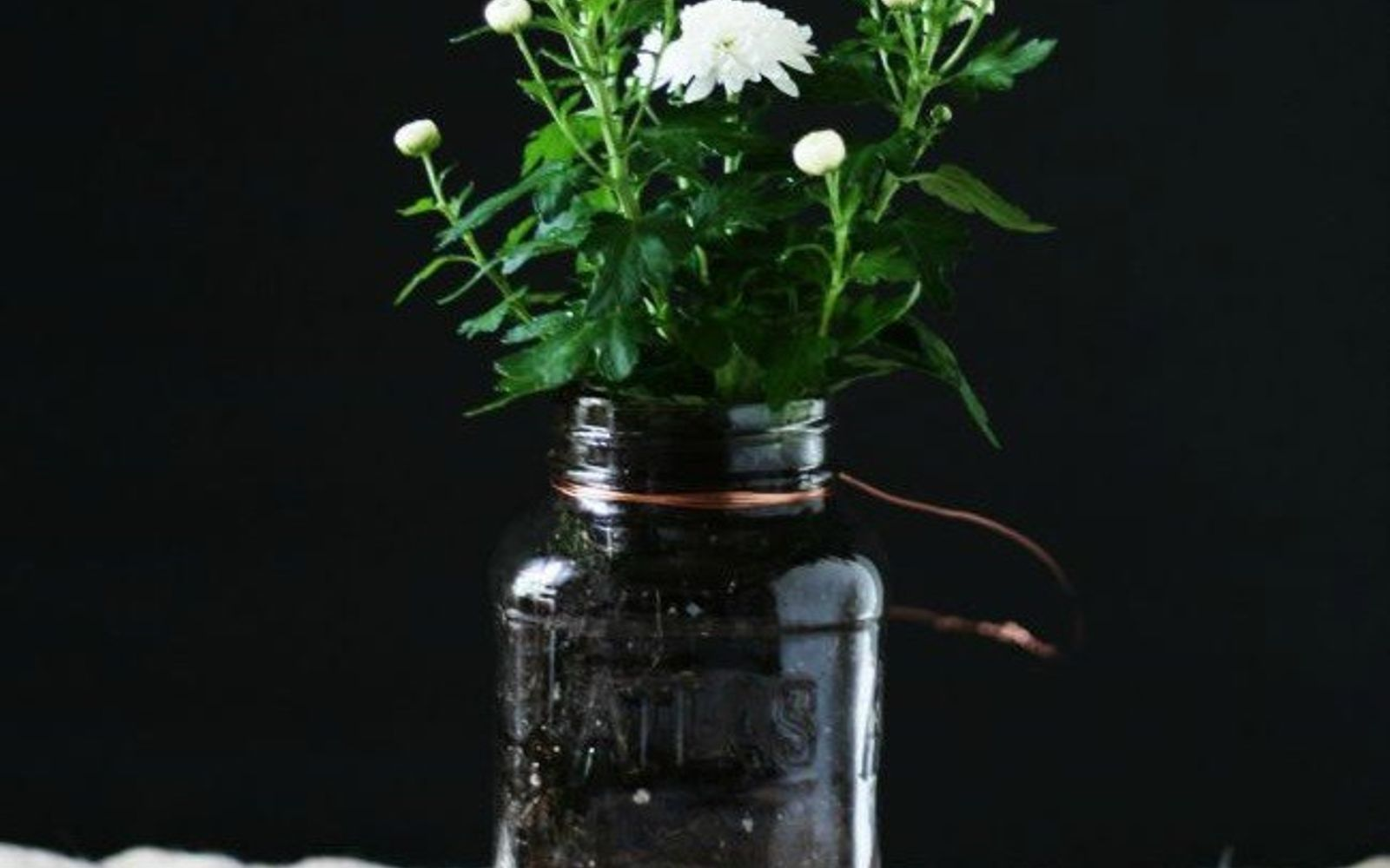 s 11 gardening hacks using empty glass jars, gardening, repurposing upcycling, Bring cuttings from your yard in for winter