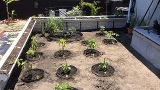 , My first ever garden